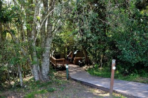 Camping in the forest Knysna