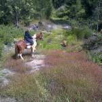Horseback outrides Knysna the Garden Route